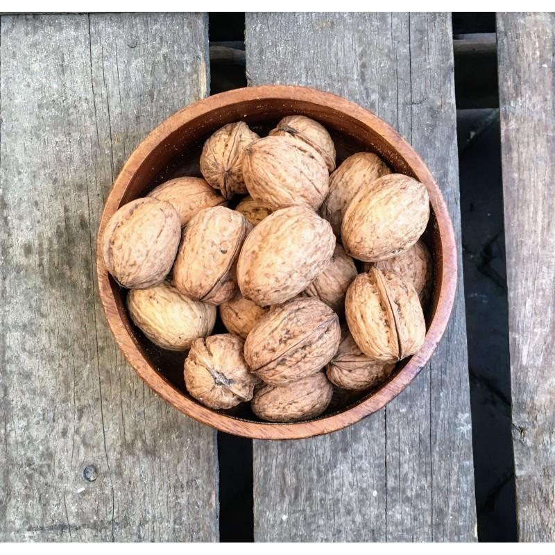 Walnoten in dop Hollands Hollandse walnoten in dop Verse gezonde noten